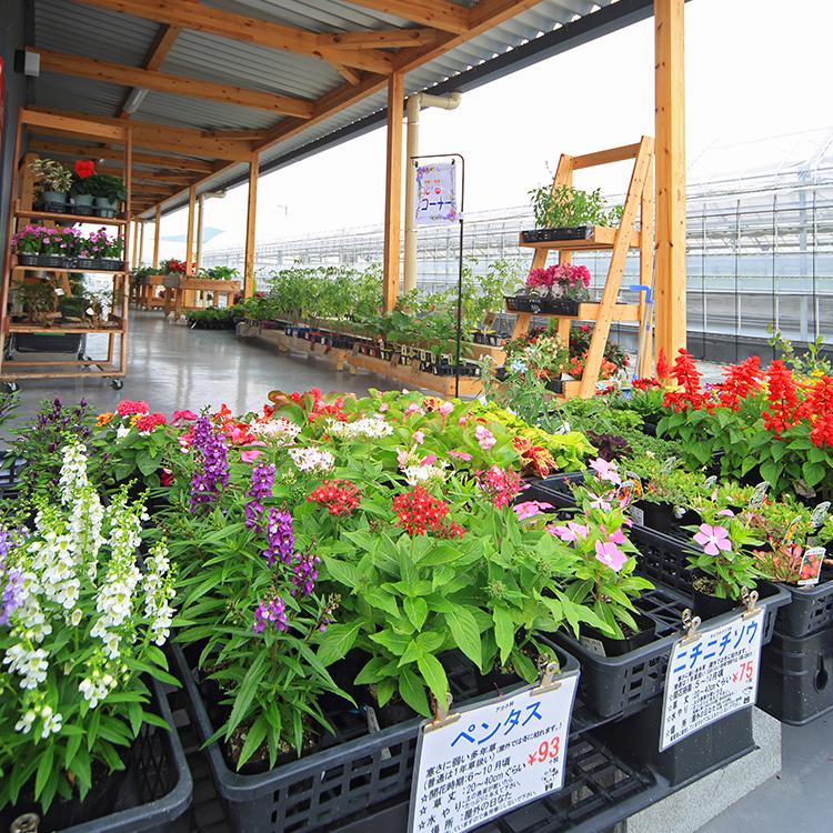 屋外の生花コーナー