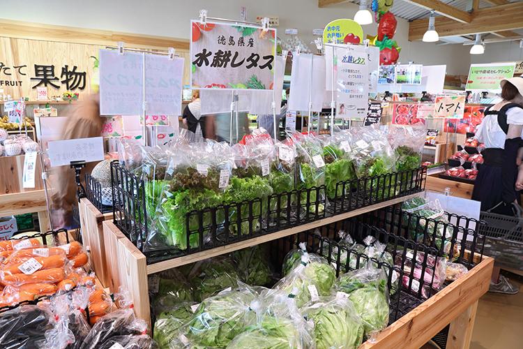 徳島県産水耕レタス